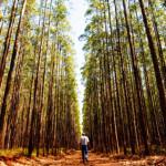 FIBRIA: Líder mundial na produção de celulose de eucalipto